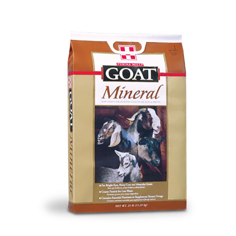 Goat 53551